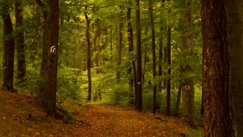 bosque2